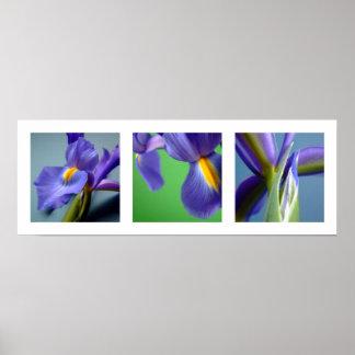 3 Irises Poster