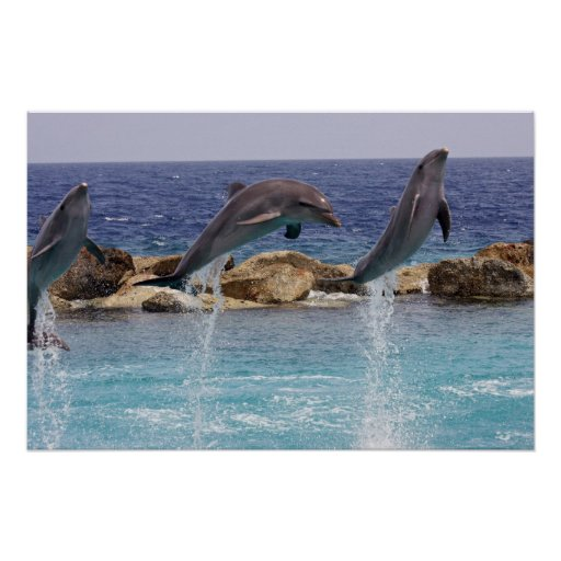 3 jumping dolphins print