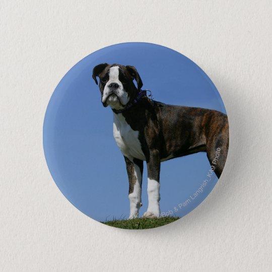 3 Month Old Boxer Puppy 6 Cm Round Badge