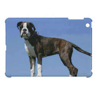 3 Month Old Boxer Puppy Case For The iPad Mini