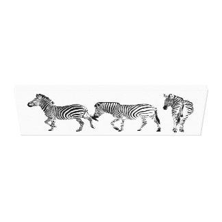 3 of a kind Zebras Canvas Print
