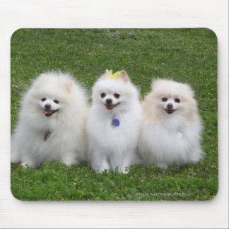 3 Pomeranians Sitting Mouse Mat