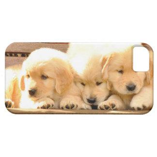 3 Puppies iPhone 5 Case