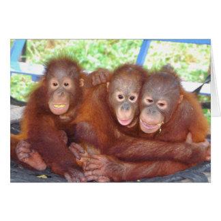 3 s Not a Crowd - Orangutan Babies Cards
