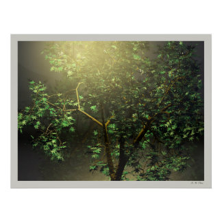 3D Japanese Maple Tree Poster
