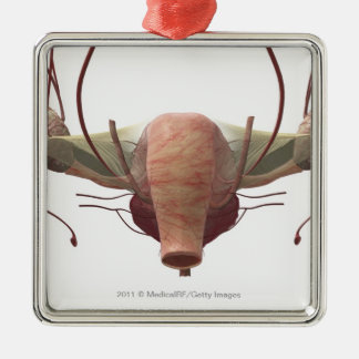 3d model of the female reproductive system christmas ornament