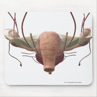 3d model of the female reproductive system mouse pad