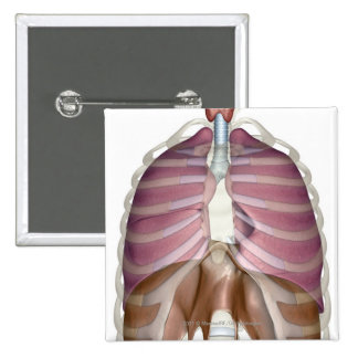 3d rendering of the respiratory system 15 cm square badge