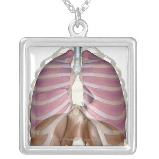 3d rendering of the respiratory system silver plated necklace