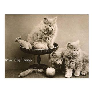 44 Pets Postcard