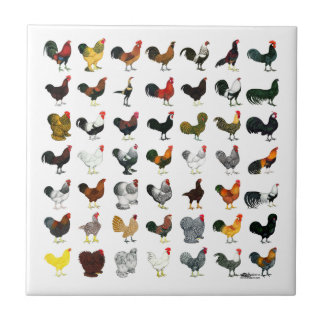 49 Roosters Small Square Tile