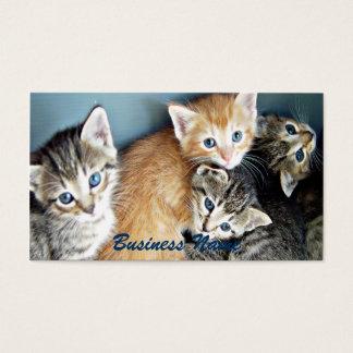 4 blue eyed Kittens Business Card
