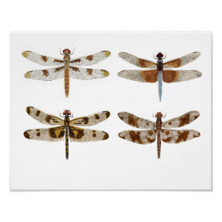 4 Dragonfly Beauties Poster