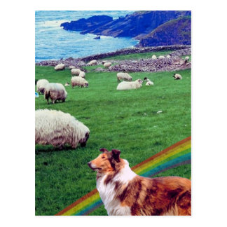 4.  Ireland Coast,  Collie & Flock of Sheep #2 Postcard