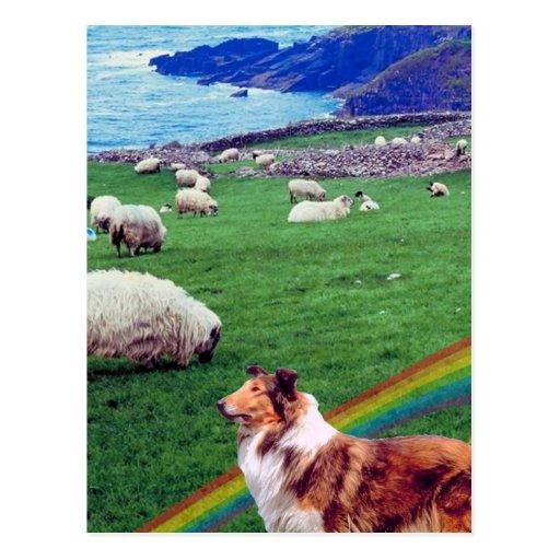 4.  Ireland Coast,  Collie & Flock of Sheep #2 Post Cards