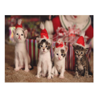 4 Kittens Christmas Card Postcard