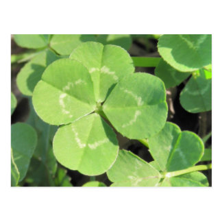 4 Leaf Clover Good Luck Charm Postcard