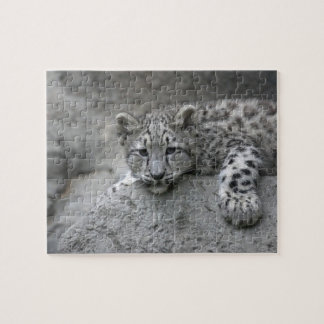 4 month old Snow leopard cub draped over a rock Puzzle