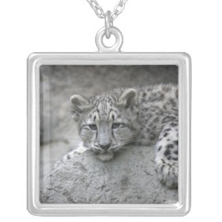 4 month old Snow leopard cub draped over a rock Silver Plated Necklace