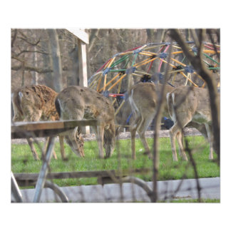 4 the Deer Photograph