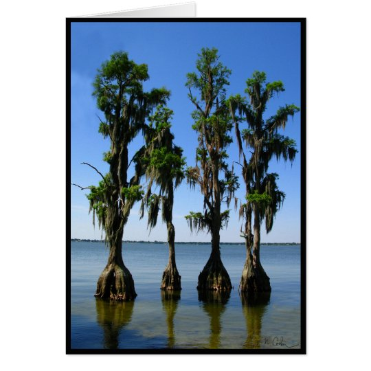 4 Trees Card