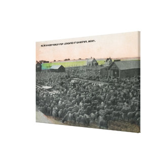 5000 Sheep Ready for ShippingChester, MT Canvas Print