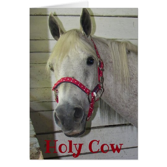 ***50th*** HOLY COW YOUNG FILLY HAPPY BIRTHDAY Card