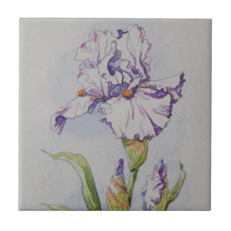 5340 Purple Stripe Iris Tile