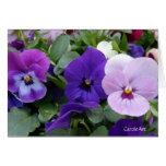 5 Blue Purple Lavender Pansies