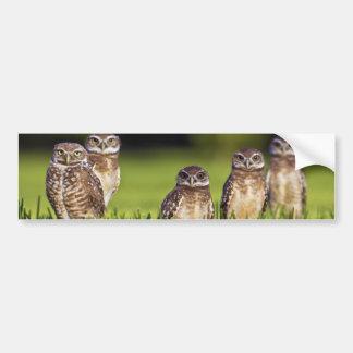 5 Burrowing Owls Athene Cunicularia Bumper Sticker