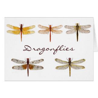 5 Dragonflies.. Card