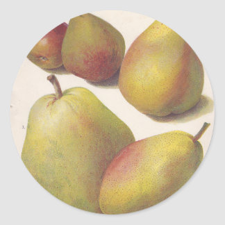 5 vintage pears illustrated round sticker
