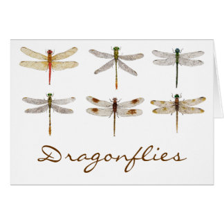 6 Orderly Dragonflies Card