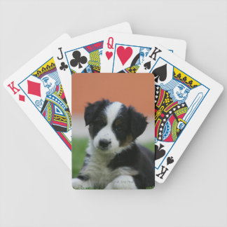 6 Week Old Border Collie Bicycle Playing Cards