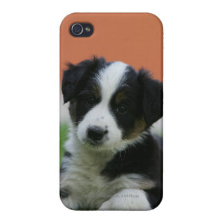 6 Week Old Border Collie iPhone 4/4S Cover