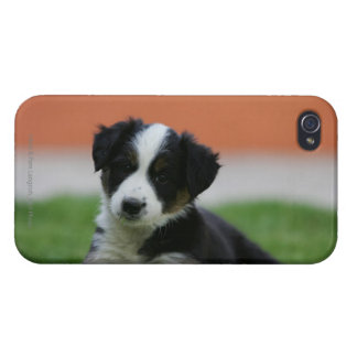 6 Week Old Border Collie iPhone 4 Case