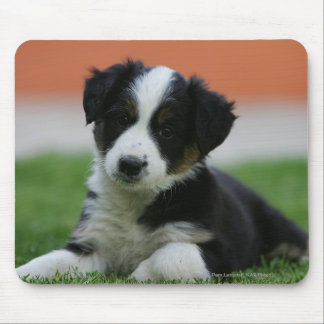 6 Week Old Border Collie Mouse Mat
