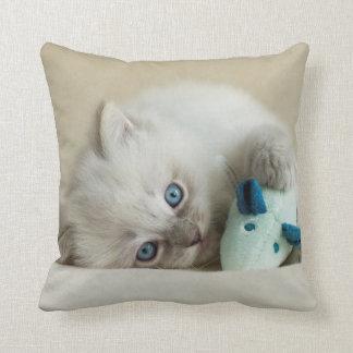 6 week old Ragdoll kitten Cushion