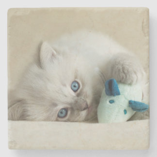 6 week old Ragdoll kitten Stone Coaster