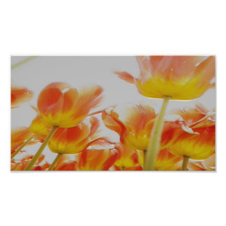 "6"" x 6"", Kodak Professional Photo Paper (Satin)"