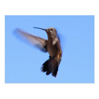 6J Hummingbird in Flight in a Blue Sky Postcards