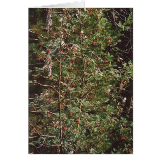 72. Bird Food - Berries on a Tree Card