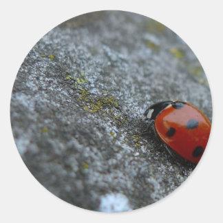 7-Spot Lady beetle Round Sticker