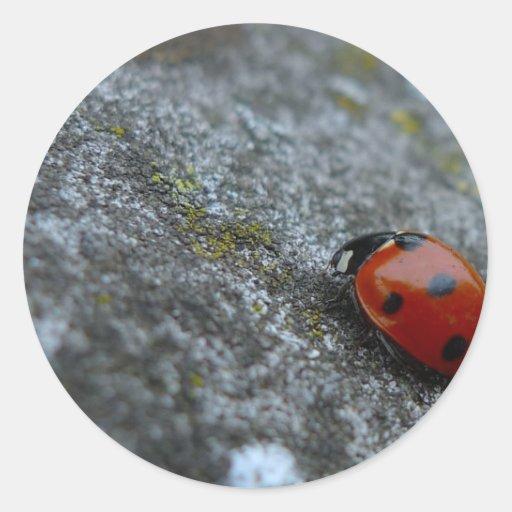7-Spot Lady beetle Stickers