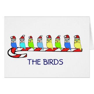 8 Budgies Card