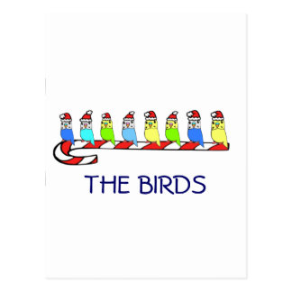 8 Budgies Postcard