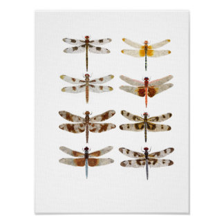 8 Dragonflies  on large canvas Poster