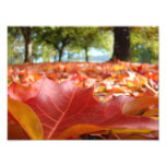 8x10 art prints Nature Photography Fall Leaves Photo Print
