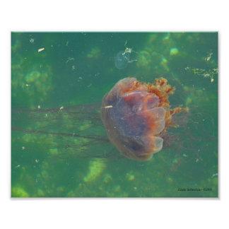 8X10 Jellyfish - Lion's Main Photo Print