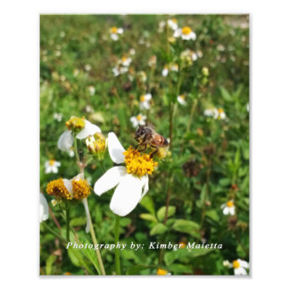 8x10 photo print Bee on Flower
